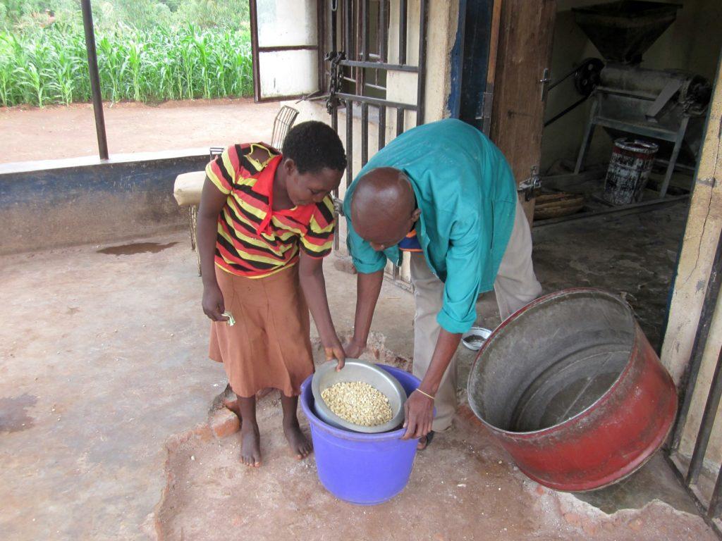 Preparing the Maize